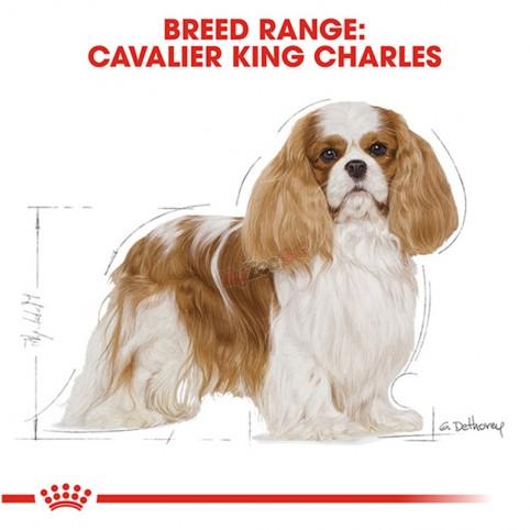Royal Canin Cavalier King Charles ADULT 1.5кг Пълноценна суха храна за кавалер кинг чарлз шпаньоли в зряла възраст над 10 месеца
