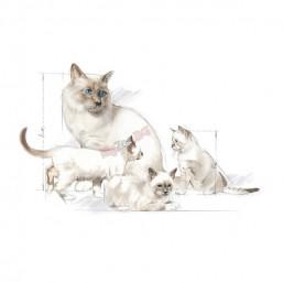 Royal Canin BABYCAT MILK 300гр. Пълноценна храна за котки - Заместител на майчиното мляко за котенца от раждането до отбиването (0-2 месеца)